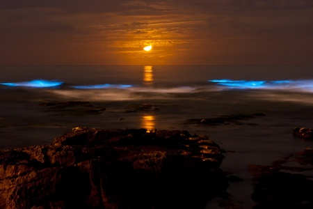 crescent moon: Bioluminescent red tide at nighttime under a crescent moon.