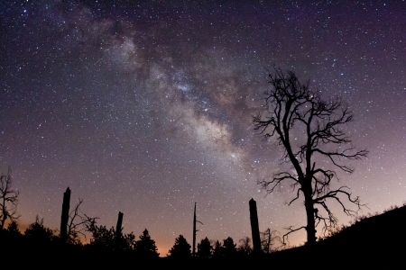 milkyway: The Milky Way and fire-damaged trees  Paso Picacho Campground at Cuyamaca Rancho State Park in San Diego County, California USA