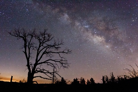 astrophotography: The Milky Way and fire-damaged trees  Paso Picacho Campground at Cuyamaca Rancho State Park in San Diego County, California USA
