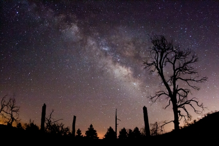 astronomy: The Milky Way and fire-damaged trees  Paso Picacho Campground at Cuyamaca Rancho State Park in San Diego County, California USA