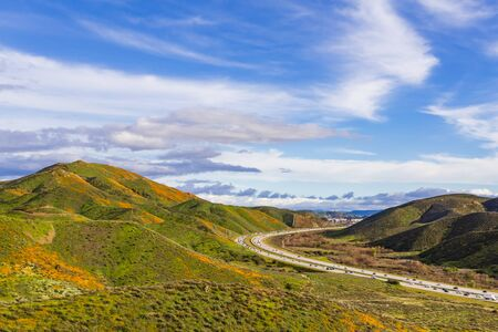 California poppies in Walker Canyon in Lake Elsinore. Interstate 15 freeway in the background.