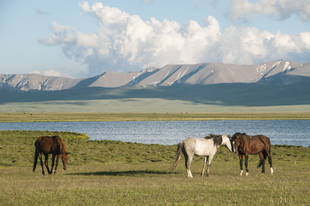 Horses on the background of mountains and Songköl Lake