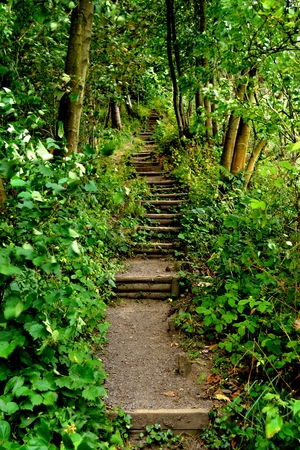 An image showing a path up some steps leading into the forest