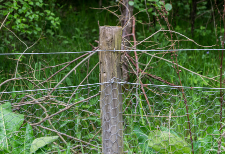 A wooden fence post holding up chicken wire with a forest in the background 版權商用圖片