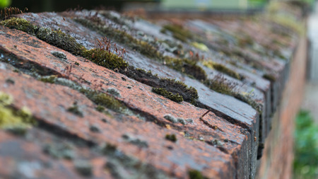 Close up of moss growing on a red and black bricked wall