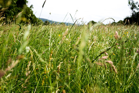 A close up inside tall green grass in the countryside with hills in the background