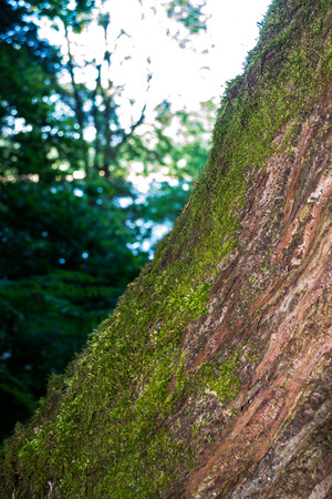 A close up of moss growing on a tree trunk which is leaning to one side