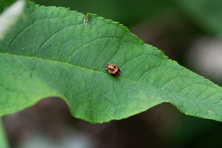 An orange and black insect sitting on a green leaf