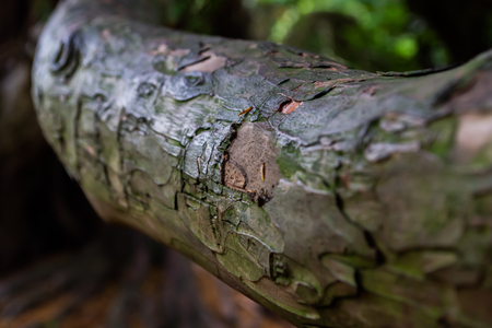 A close up of a wooden branch focussing on the missing bark