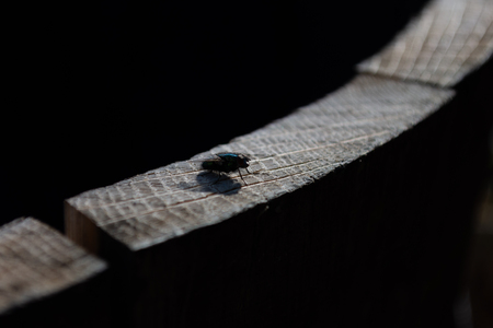 Close up of a blue fly sitting on top of a wooden panel