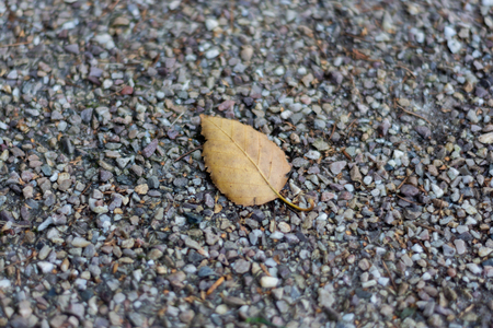 A brown autumnal leaf lying on grey gravel with the veins clearly visible Banco de Imagens