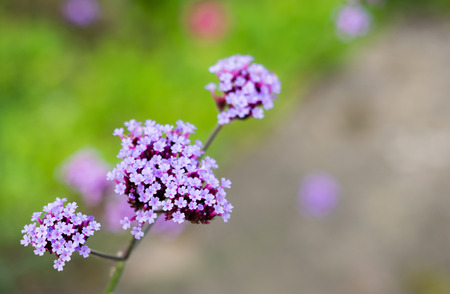 Small purple flowers on green stalks with a blurred out green background