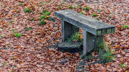 An old wooden bench surrounded by autumn leaves on the ground Banco de Imagens