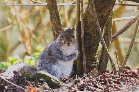 A squirrel shown standing on it's hind legs looking towards the camera