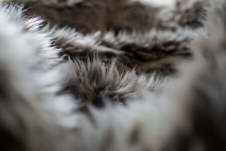 Looking through a faux fur blanket with brown, white and grey colours Banco de Imagens - 145365132