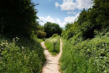 A single sandy path splitting into two surrounded by green foliage