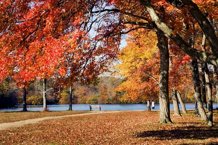 long lake: A person walking in the park in the fall.