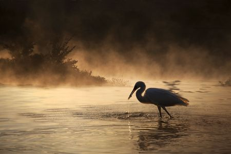 Silhouette of a Swan with a small fish in its mouth and a dramatic background.