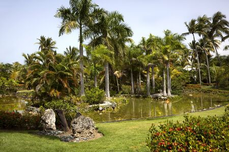 Palm trees set withen a pond. Punta Cana, Dominican Repuplic.