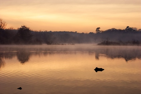 Mist rising from the river at sunrise.