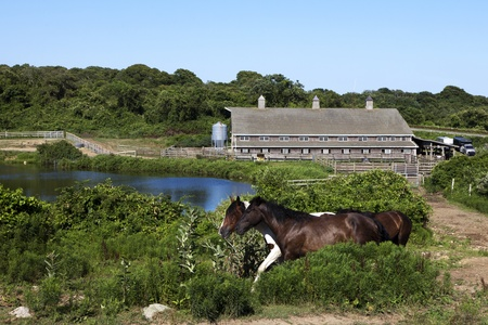 long lake: Two horses walking  with a pond and old barn in the background. This is the oldest ranch in the country  Deep Hollow Ranch, is at the easternmost point of Long Island in Montauk, New York.