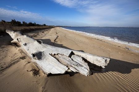 Driftwood on the beach. Taken at Fire Island National Seashore, Long Island, New York.