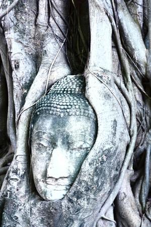 budha: Budha