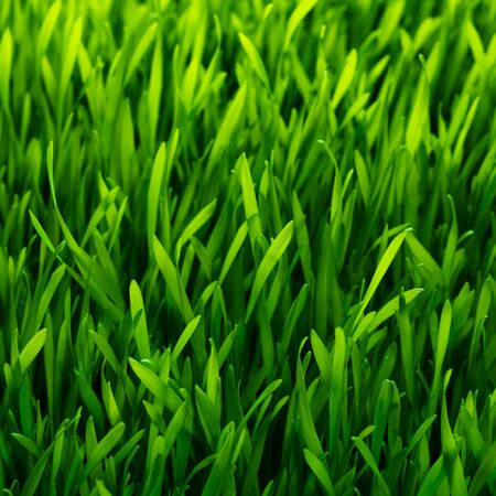 healthy grass pattern