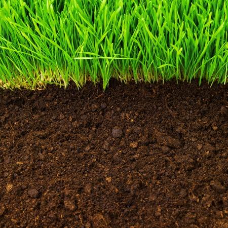 soil: erba sana e modello del terreno