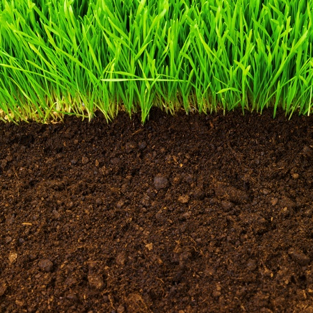 healthy grass and soil pattern Stock Photo - 9822751