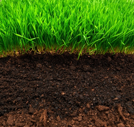 healthy grass and soil pattern photo
