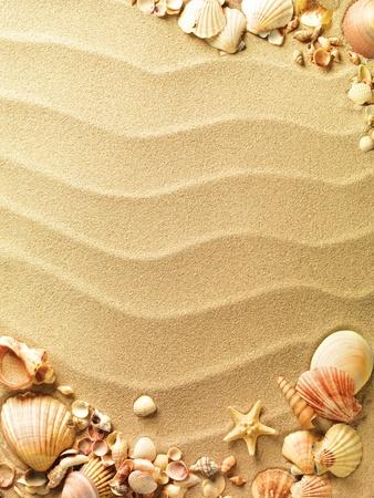 conchas: conchas de mar con arena como fondo
