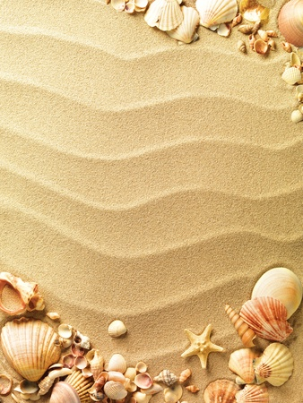 sea stars: sea shells with sand as background Stock Photo