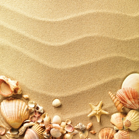 sea shells: sea shells with sand as background Stock Photo