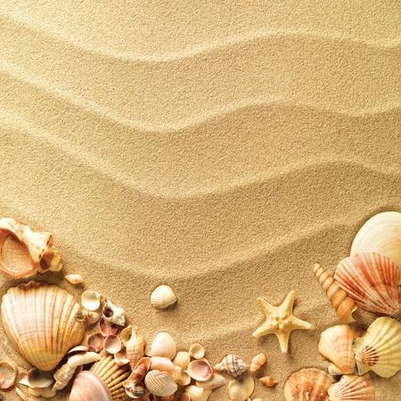zee, schelpen met zand als achtergrond