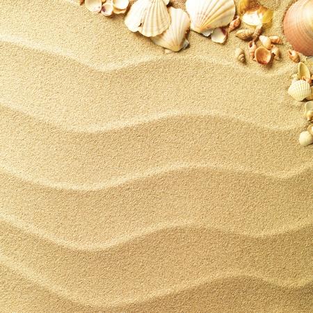 etoile de mer: coquillages avec du sable comme fond
