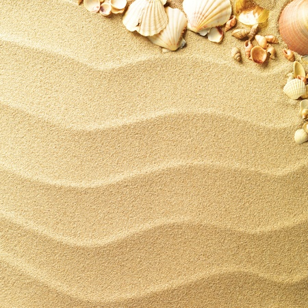 sands: sea shells with sand as background Stock Photo