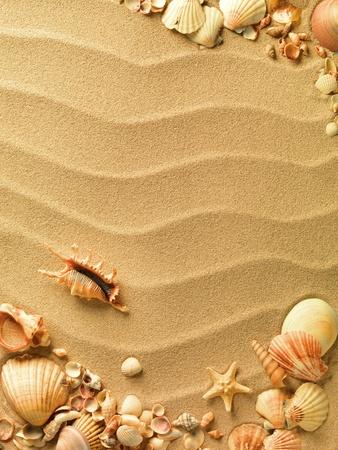 muszelek z piaskiem jako tło