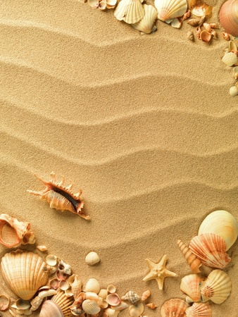 seashells: sea shells with sand as background Stock Photo