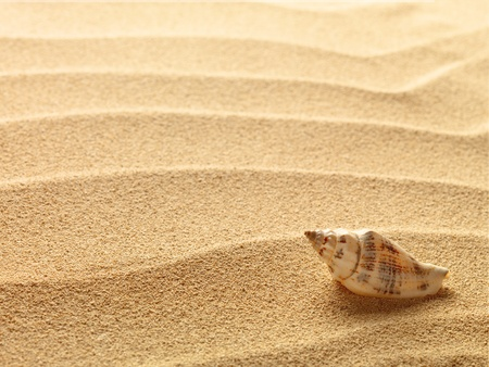 sea shells with sand as background Stock Photo - 9822564