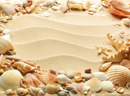 sea shells with sand as background Stock Photo - 9822565