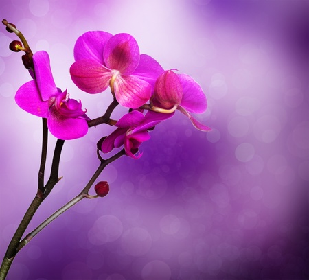 orchid flower with natural background