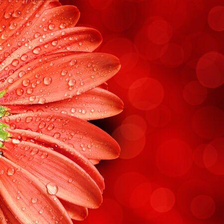 naturaleza: la primavera de flores de fondo