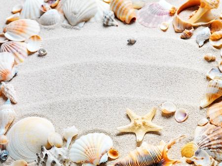 sandy: playa de arena con conchas y estrellas de mar