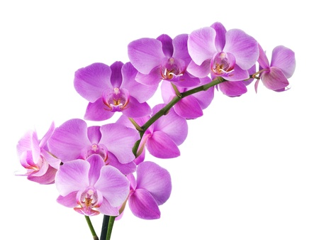 orchidee: orchidea bianca Archivio Fotografico
