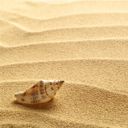 nautilus shell: sea shells with sand as background Stock Photo