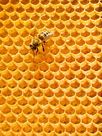 Top view of the working bees on honeycells. Stock Photo - 14092417