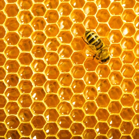 Close up view of the working bees on honeycells. Stock Photo - 14086703