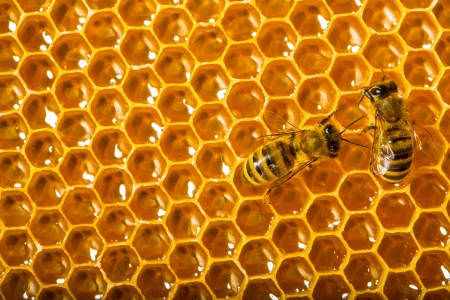 Close up view of the working bees on honeycells. photo