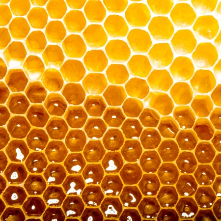 fresh honey in comb Stock Photo